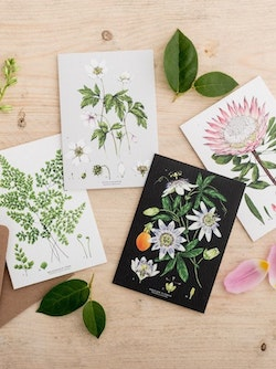 Catherine Lewis Cards 1