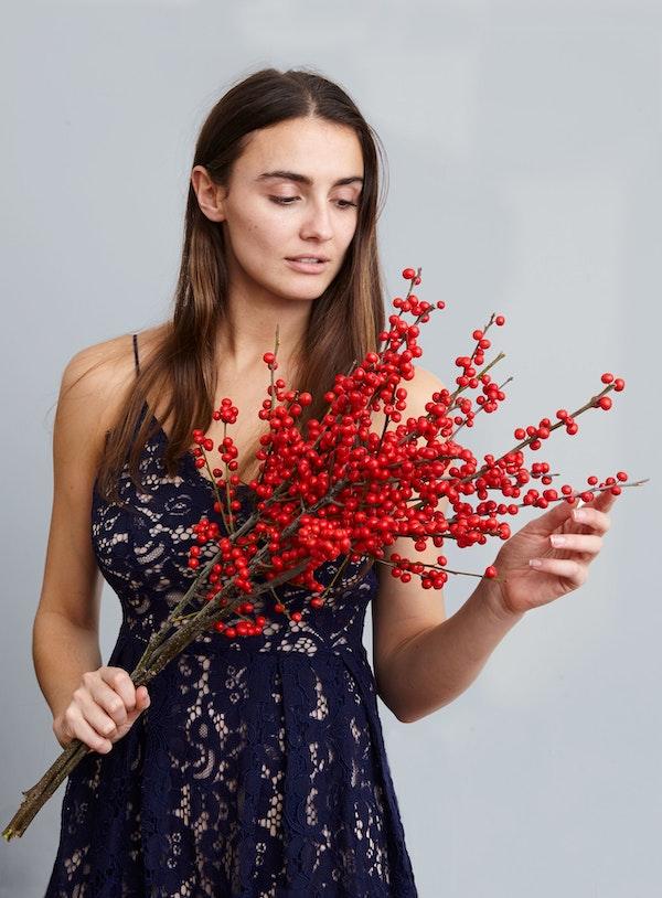 Gardenia Xmas 185457 1