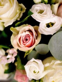 Clement Bouquet Close Up
