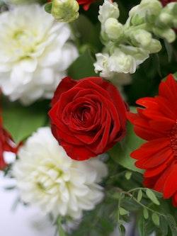 Lovelace Closeup