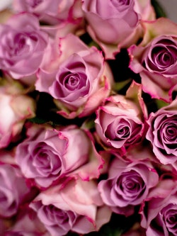 Memory Lane Roses Close Up