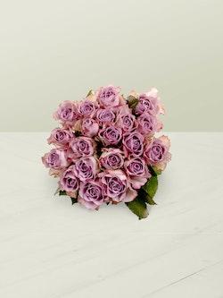 Memory Lane Roses Head On