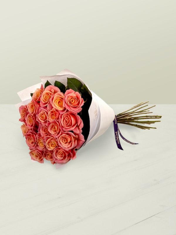 Miss Piggy Roses