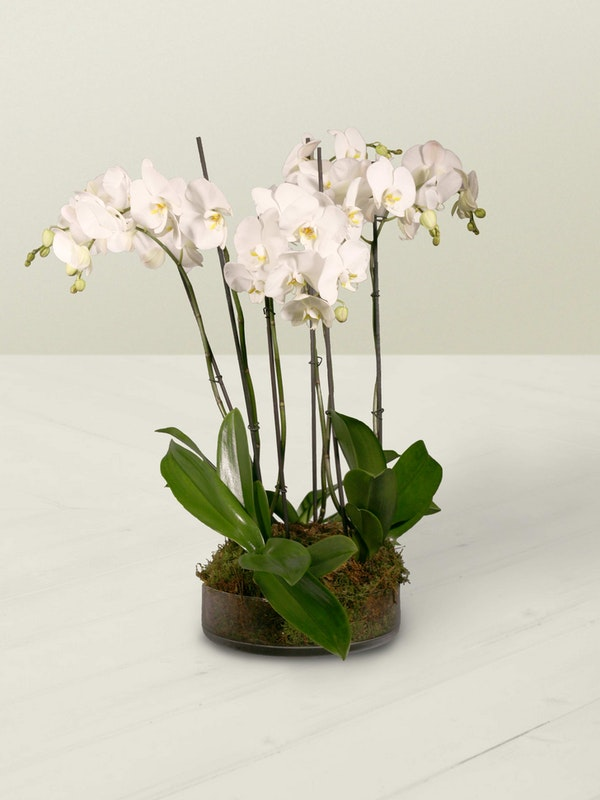 Orchid Planter 2 Side 2