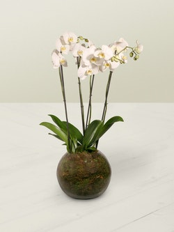 Orchid Planter 3 Side